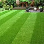 Turfing Company Wiswell