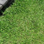 Turfing near me Wiswell